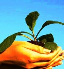 Studii pentru protecţia mediului.